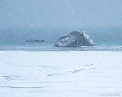 Blizzard on a Norwegian beach (Sue MacCallum-Stewart) Tags: lofoten norway snow blizzard beach minimal