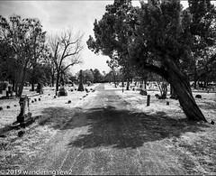 AustinOakwoodCemetery_infrared-189 (wanderingYew2 (thanks for 4M+ views!)) Tags: 120 6x7 austin austintx austintexas mamiya mamiya7ii oakwoodcemetery r72filter blackandwhite blackandwhitefilm cemetery film filmscan infrared infraredfilm mediumformat