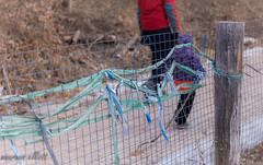 Tie A Rag (maureen.elliott) Tags: happyfencefriday hff fencerags walking evergreenbrickworks pathway ties decorate fence linkfence