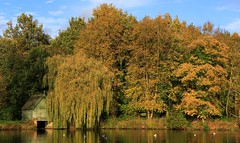 Market Bosworth Country Park  (5) (Richard Collier - Wildlife and Travel Photography) Tags: landscape englishlandscape marketbosworth leicestershire autumncolours autumn water
