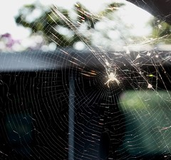 webmaster (CatnessGrace) Tags: spider spiderweb light