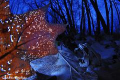 Rana dalmatina (marco_colombo) Tags: ranadalmatina rana frog agile anfibi amphibians animali animals natura nature imbrunire notte night blue red rosso blu bosco woodland lombardia lombardy wildlife marcocolombo wwwcalosomait