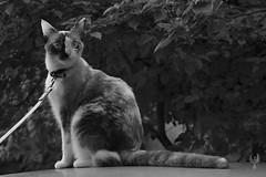 Dos caras ([[^Raúl^]]) Tags: cat cats kittens puss pussycat chatons chat katzen mininos gatitos gatos gato gata gatita felines gatto gattos paws animal friend family amigo familia