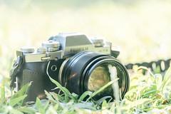 FUJIFILM X-T3 & XF 56mm F/1.2 APD (Eternal-Ray) Tags: fujifilm xt3 xf 56mm f12 apd 70300mm f4556 g ssm
