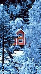 Farge i blått -|- Colour in blues (erlingsi) Tags: erlingsi iphone erlingsivertsen prismatic house blue snow winter ocher trees hjellbakkane austefjorden volda snøv snø schnee