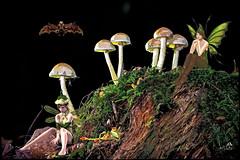 Bad Luck - Wrong Mushrooms. (SØS: Thank you for all faves + visits) Tags: bat digitalartwork art kunstnerisk manipulation solveigøsterøschrøder artistic elf fairytale fantasy frog mushroom nature