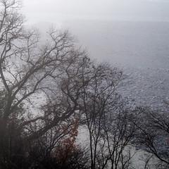 BRUME MATINALE (zventure,) Tags: zventure bordsduvar bois brouillard brume extérieur eau eaudouce alpesmaritimes arbre rivage galets gris paysage carre square feuilles feuillage janvier aube