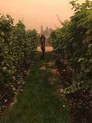 Sperling Winery, Kelowna, BC - Sharina Reddy (Sharina Reddy BCIT Radio Arts) Tags: kelownabc winetours beautifulvineyards sperlingwinery beautifulbc