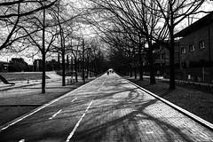 When the shadows create their art (muntsa-joan-BW) Tags: blackandwhite bw bnw street streetphoto streetphotography shadows tree calle catalonia city arboles sombras