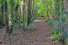 Abbey Walk (CarolMoore007) Tags: tinternabbey abbey cistercian ruins wexford forest walk republicofireland ireland