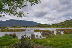 On the river / На реке (Vladimir Zhdanov) Tags: travel argentina tierradelfuego nature landscape river water sky cloud grass forest tree