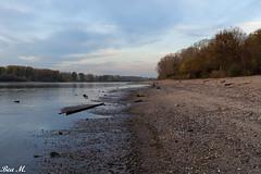 Flußufer (trixi.mi) Tags: bäume autumn spaziergang trüb impressionen river water rhein sky rheinbett fluss wolkig