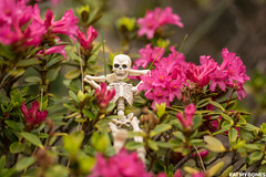 New bog post on the blog! Waiting for spring in the Mercantour (french Alps) (EatMyBones) Tags: figurine mercantour miniature nature poseskeleton rement skeleton snow toy toyphotography