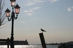 Giudecca, Venice (Colin Bell Writer) Tags: giudecca italy venice giudeccacanal waterways venuto seabirds gulls evening eveninglight