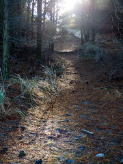 Walking the Forest Trail (Steve Taylor (Photography)) Tags: green brown light rock stone newzealand nz southisland canterbury christchurch trees root lensflare perspective autumn sunny sunshine sun needles track forest bottlelake trail hill