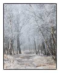 Heavy Frost. (47mki) Tags: track frost trees birch moor wood