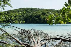 20170828-20170821-IMG_5846 (sandraO_O) Tags: tree water plitvičkajezera croatia mystical lake