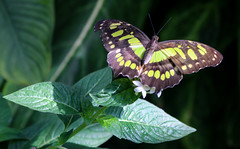 Vacances_0867 (Joanbrebo) Tags: mainau konstanz badenwürttemberg de deutschland canoneos80d eosd autofocus papallona papillon mariposa butterfly farfalle