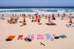 Manly beach, Sydney, summer 2019  #15 (lynnb's snaps) Tags: e100 ektachrome100 manlybeach omzuiko35mmf2 olympusom4ti colour film reversal summer transparency 2019 kodakektachrome100 noritsuscan sydney australia ocean sand sun swimmers sunbaking sunbathers slr thisiswhyilovefilm ishootfilm