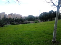 A grassy slope,   Parque Enrique Tierno Galvan, Madrid (d.kevan) Tags: tree trunks branches parqueenriquetiernogalvan madrid parksandgardens grass slopes views chimneys buildings paths skylines