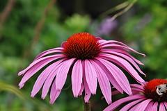 Flower (Hugo von Schreck) Tags: hugovonschreck flower blume blüte macro makro fantasticnature canoneos5dsr tamron28300mmf3563divcpzda010