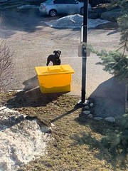 SIGHTING: DOG in #BRAESIDE, large black dog with collar. Please share & RT for owner awareness YYC Pet Recovery shared a post. Just saw this pup outside my house in braeside. Has a collar and everything. Couldn't get him to come in my yard. 2019-03-28T16: (yycpetrecovery) Tags: ifttt march 29 2019 0111am
