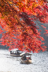 Breeze (johnshlau) Tags: breeze boat ride sailing light backlight morning katsurariver 桂川 arashiyama 嵐山 kyoto japan river riverbank water autumncolors autumn colors foliage redleaves red leaves trees