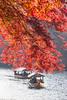 Breeze (johnshlau) Tags: breeze boat ride sailing light backlight morning katsurariver 桂川 arashiyama 嵐山 kyoto japan river riverbank water autumncolors autumn colors foliage redleaves red leaves trees
