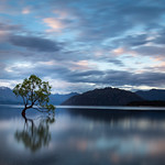 That Wanaka Tree thumbnail
