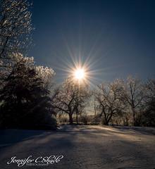 Snowy morning (JenniferCShade) Tags: afterthestorm beauty countryliving jennifercshade morning nature ohio ourneckofthewoods snow sunburst tranquility winter