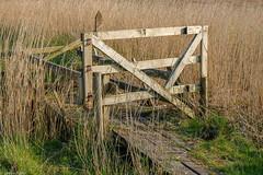 Gate and reeds (Donard850) Tags: connemara ireland reeds gate weatheredwood wood