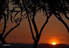 Coucher de soleil (Jehanmi) Tags: sky ciel sun nature soleil trees arbres payage landscape nikon sunset skyscape dreamscape coucherdesoleil