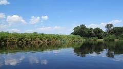 Okavango Delta, Botswana (h0n3yb33z) Tags: botswana animals wildlife okavangodelta africa