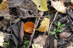 Seen (Jaan Keinaste) Tags: pentax k3 pentaxk3 eesti estonia loodus nature seen mushroom fungus sügis autumn