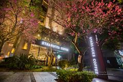 櫻花咖啡廳 (湯小米) Tags: ef 1635mm f28 l new taipei city さくら 6d canon flower spring taiwan 新北市 日本 林口區 櫻花 星巴克