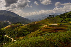 Rice Terrace (Fredphoto89) Tags: 2018 blue clouds green hill northvietnam rice ricepaddies riceterrace roadtosapa stock travelasia tree vietnam whiteaspestosvietnam asia china