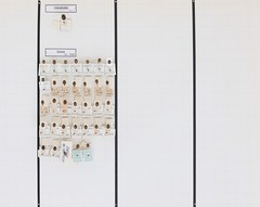 coleoptera-coccinellidae-oenopia-conglobata-impustulata-lyncea-R1-5667 (nmbeinvertebrata) Tags: ccbync nmbe5667 64123 coleoptera coccinellidae oenopia conglobata impustulata lyncea r1