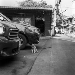 ขาใหญ่คุมซอย (oxo oxo) Tags: superfujicasix fuji fujica camera mediumformat foldingcamera ilforddelta100 ilford delta100 expired expiredfilm film 120 6x6 blackwhite blackandwhite bw monochrome bangkok analog streetphotography ishootfilm filmisnotdead filmcamera filmphotography cat