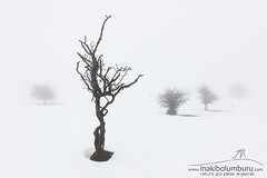 VULNERANT OMNES, ULTIMA NECAT (Obikani) Tags: snow nature winter urbasa cold weather landscape beautiful white scenic spain snowy tree season navarra sky frost nobody beech bright fog solitude bare natural freeze branch day mountain scene travel park europe scenery forest country background plant trunk land frosty reserve ice rural trees fresh wood field beauty mist blue