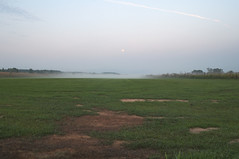 Fog on a grass field (Miktima) Tags: fog grass field moon green morning meadow grassland nature lawn strip bare mist