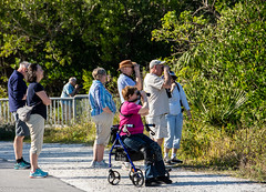 """""""Kate, why are you lying to those poor people again? That is NOT a Mauve-flanked Day Heron!"""" (Jim Frazier) Tags: 201801floridatrip 2019 binoculars birders birding birds birdwatchers birdwatching caption dingdarlingnationalwildliferefuge doneexportedtoflickr fauna fl flora florida forest funny fws humor january jimfraziercom kate knees living nationalwildliferefuge nature nwf nwr optics people preserve q2 roadtrip rollator sanibel sunny swamp usfws vacation walker winter woodland woods zeiss"""
