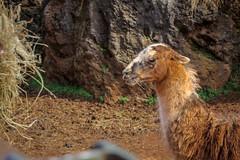 (95Maraa) Tags: pet dog llama zebra elefante cabárceno animales tamaraarcehernández tamara mara958 mara arce hernández sky cielo paisaje spain españa cantabria 95maraa blue azul green