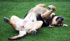 Love me please! (Engin Süzen) Tags: animal animals dog pet street nature natura allnatural natgeo olympus olympusem1markii olympusomdem1markii m43 m43turkiye