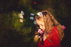 (solomiya.p) Tags: hour day evening sunset sunlight light sun girl child portrait autumn bokeh bokehlicious park children childhood wonderland outdoor 135mm red princess miss crown green floers botanical cosmos