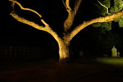 Late at night in the old cemetery - Christ Church - Naenae (Maureen Pierre) Tags: xt2 fujifilm lit light trunk tree gravestone cemetery christchurch naenae