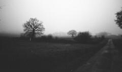 Almost the night (Gwebur) Tags: film 135 trix 1600iso rodinal 150 nikon f2 nikkor 28mm28ais dark fog grain bw