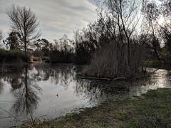Flooded Marshland (Kelson) Tags: marsh nature hike southbay madronamarsh torrance california plants