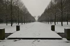 Symmetry (Alex Borst) Tags: nederland netherlands niederlande paysbas apeldoorn gelderland guelders nikon d5300 sneeuw snow schnee neige winter hiver paleispark palace paleis het loo park symmetrie symmetry
