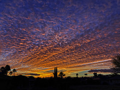 Never Ever Gets Old (oybay©) Tags: arizona sunset monsoon cloudy clouds saguaro cactus silhouette color colors nature natural orange yellow red purple outdoor sky dusk cloud city tree grass