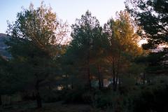 2018.56-23 (boyan_d) Tags: france provence aubagne msopticsapoqualia35mmf14mc …pellicule kodakportra400 nature arbre marseille